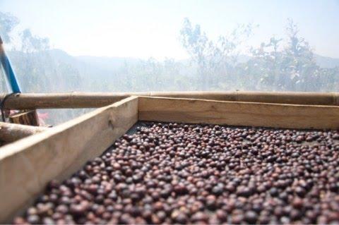 ผลิตกาแฟแบบแห้ง