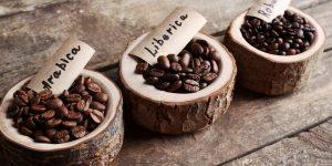 สายพันธุ์ของกาแฟที่คุณควรรู้จัก !