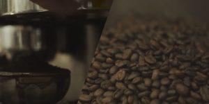 ประเภทของสายพันธุ์กาแฟ
